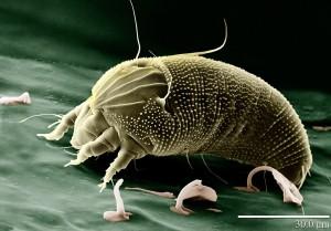 акне и кожные паразиты